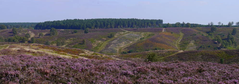 Cannock Chase in Staffordshire
