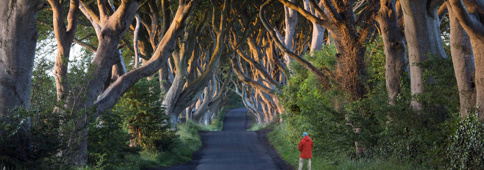 Dark Hedges of Armoy in County Antrim, Noord-Ierland